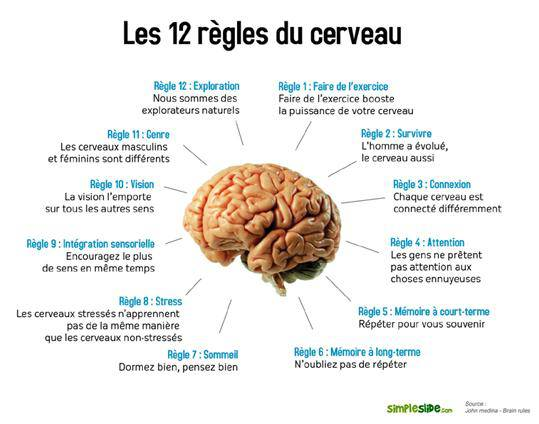 Notre cerveau