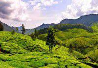 agriculture en Inde