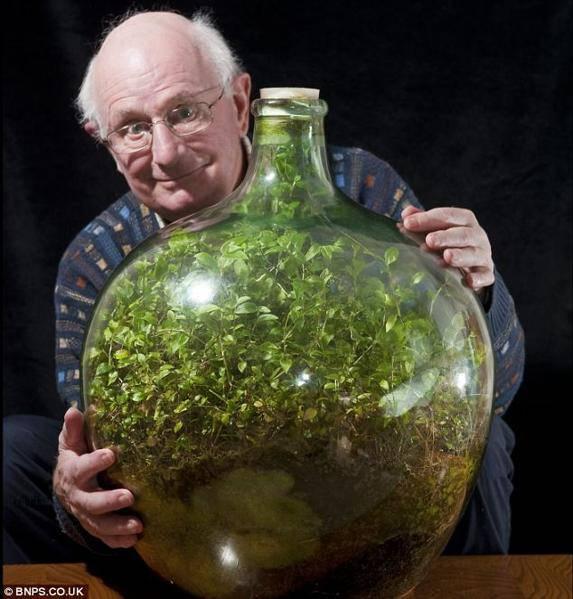 jardin dans une bouteille prospère