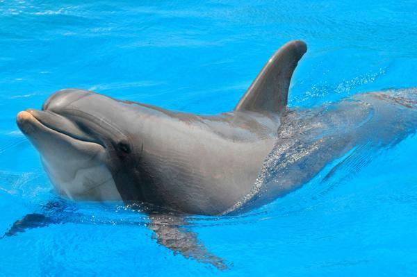 les dauphins sont des personnes