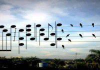 Photographie d'oiseaux