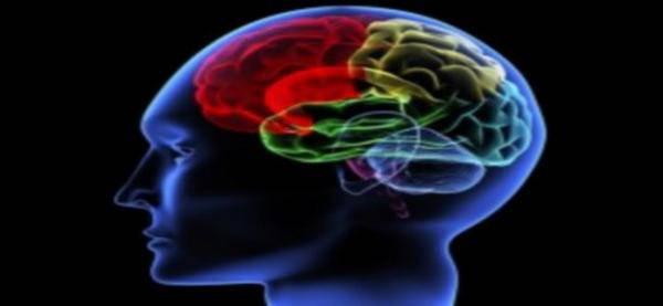 aspartame endommage notre cerveau