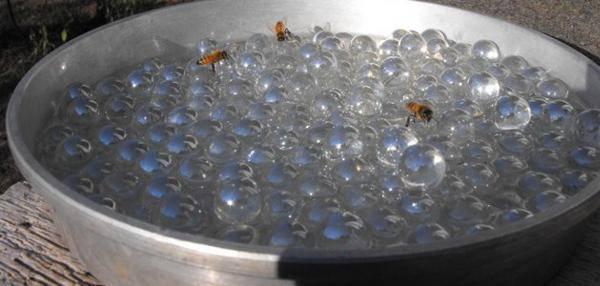abreuvoir pour les abeilles