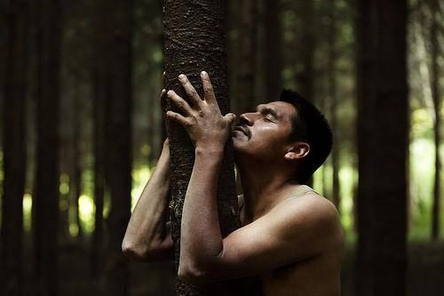 étreindre des arbres est bon pour la santé