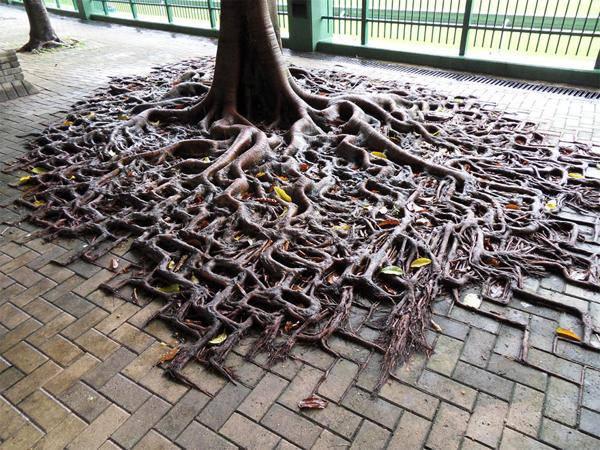 arbres rencontrent le béton