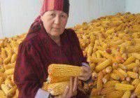 produits OGM