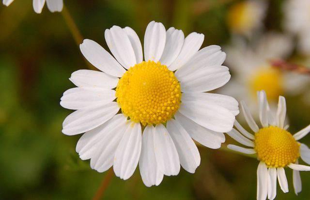 plantes médicinales (5)