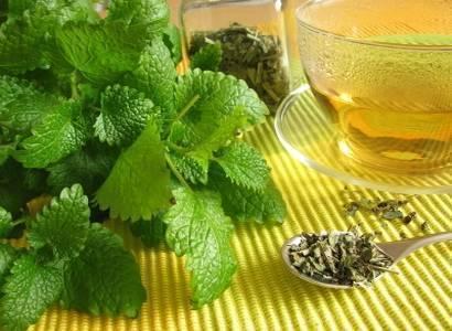 plantes médicinales (8)