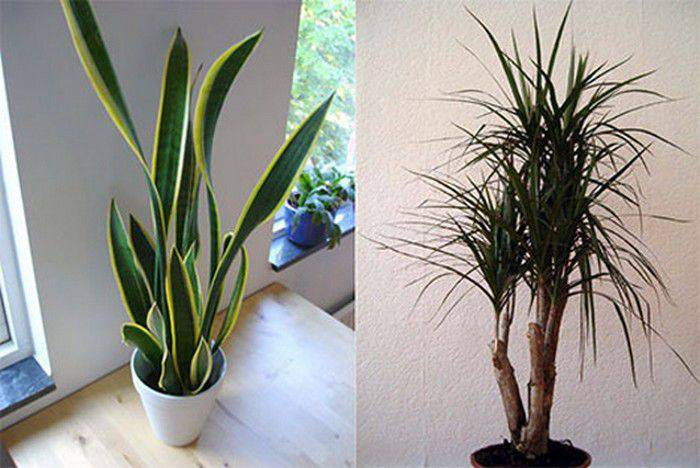 Top 10 des plantes d int rieur pour r duire la pollution de l air for Plante dinterieur