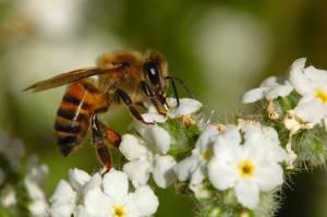 taux de mortalité des abeilles