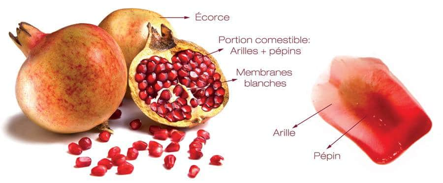 Les Fruits Commencant Par G