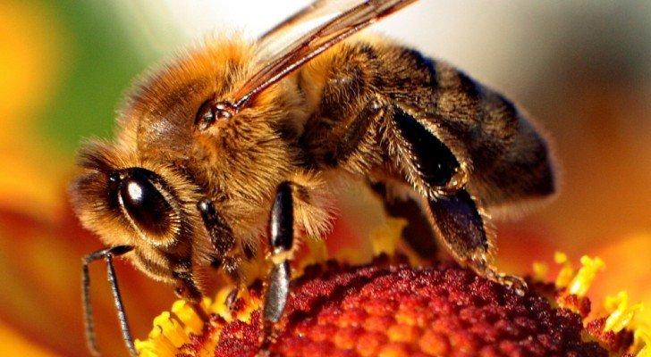 abeilles-sont-toutes-en-train-de-disparaître