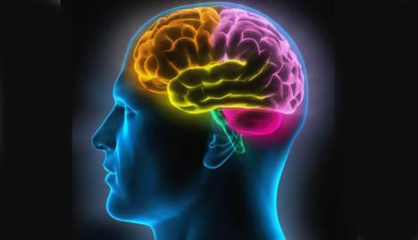 cerveau détecte