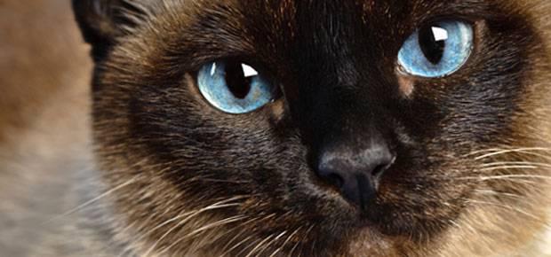 Voici un guide complet sur les animaux totems - Symbolique du chat ...