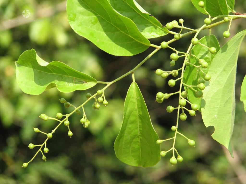 plantes-légales (1)