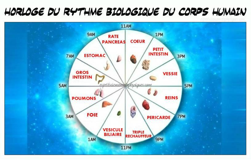 Horloge du rythme biologique