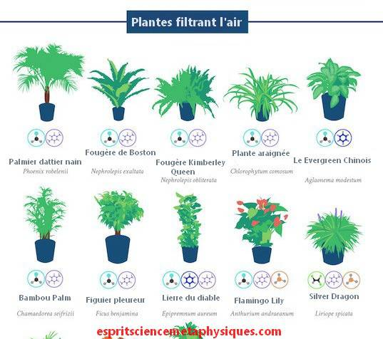 plantes-d-intérieur-2