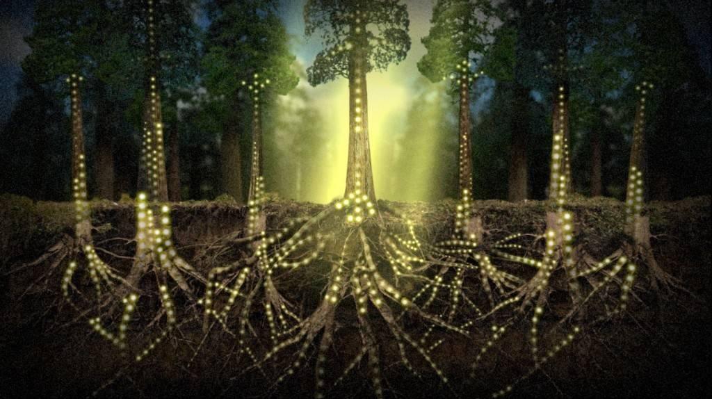 Les-plantes-communiquent (1)