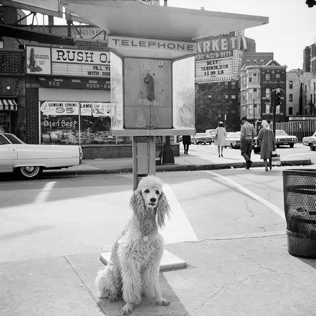 1960s. Chicago, IL