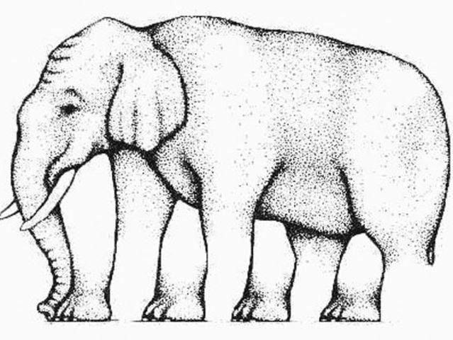 How many legs does this elephant have? You sure?