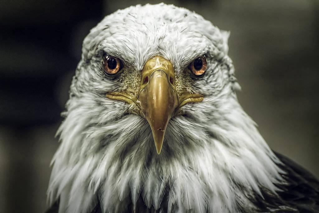 Les oiseaux sont nos messagers et ils m ritent d 39 tre observ s - Signification des plumes d oiseaux ...