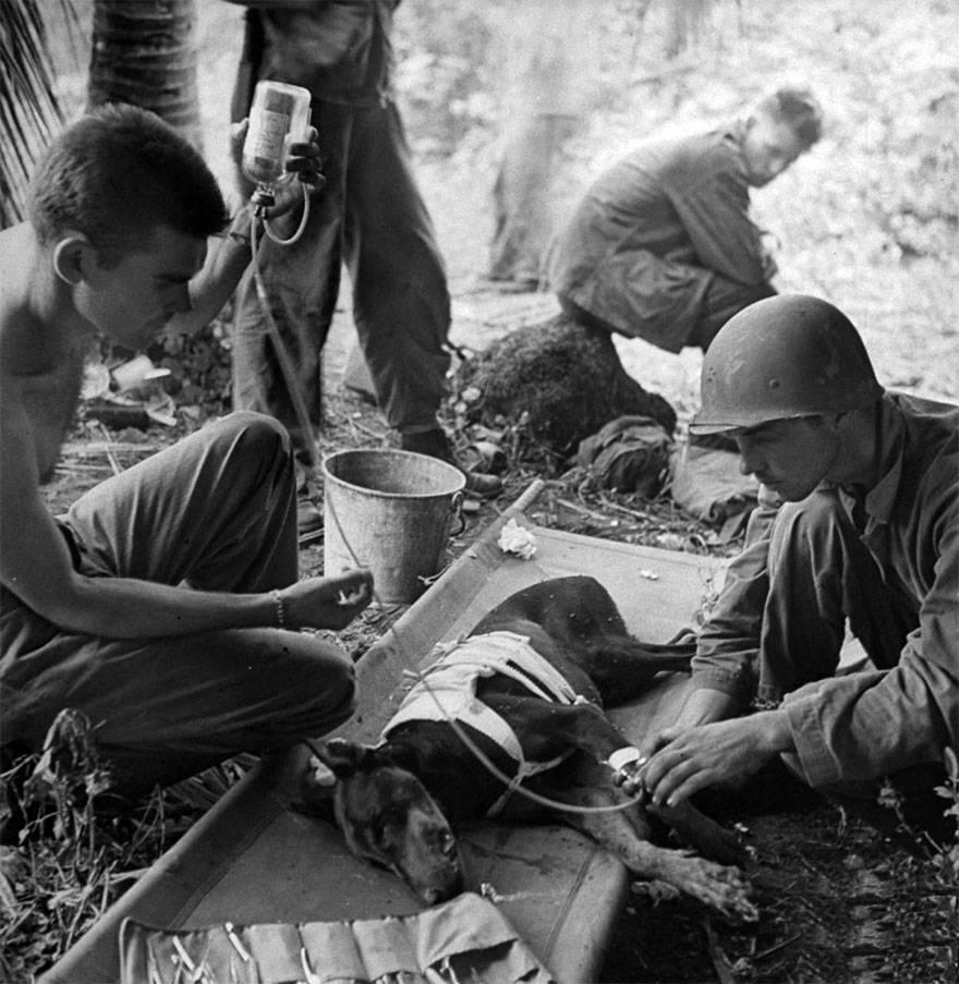 1944 les chiens
