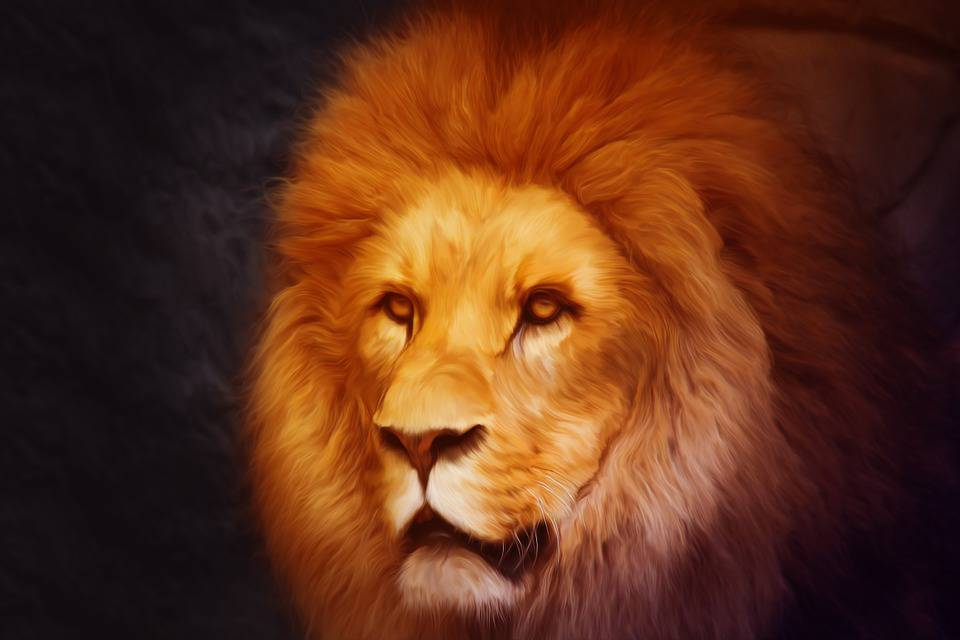 Lion, Photoshop, Portrait, Monde Animal, La Composition
