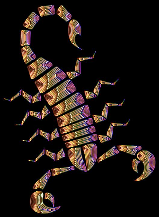 Résumé, Des Animaux, Arachnide, Art, Coloré