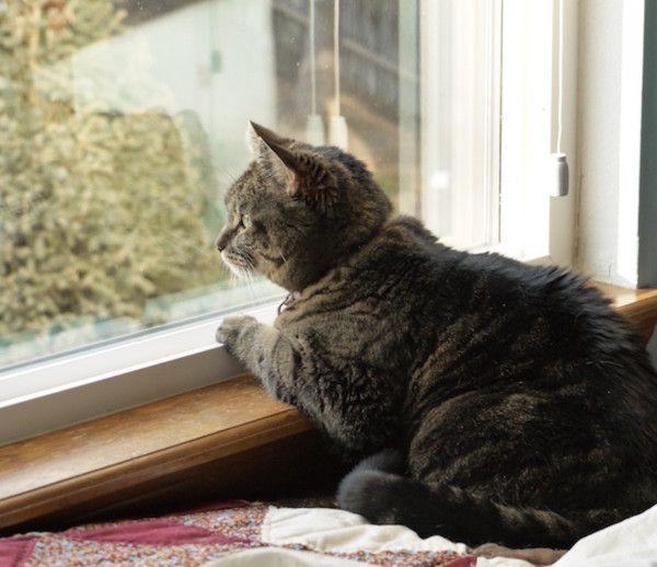 C'est parce que ce chien était follement en amour avec le chat dans la rue - qui aussi se percher dans la fenêtre avant de sa maison.