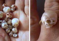 crânes sculptées