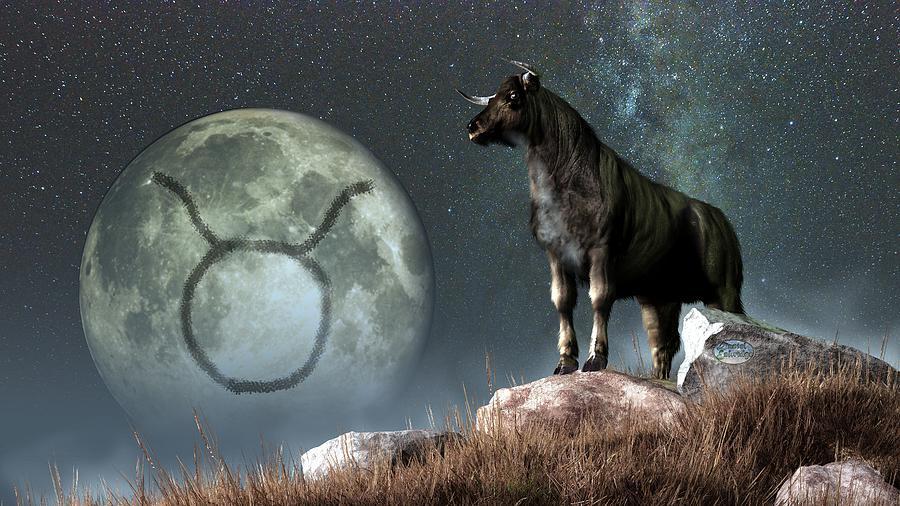 ami-taureau-2