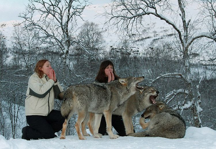reserve-de-loups-6