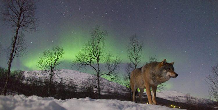 reserve-de-loups-8