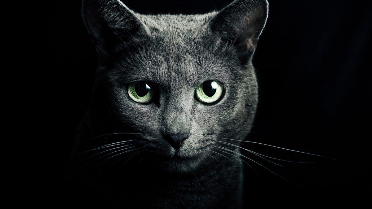 chats vous protègent