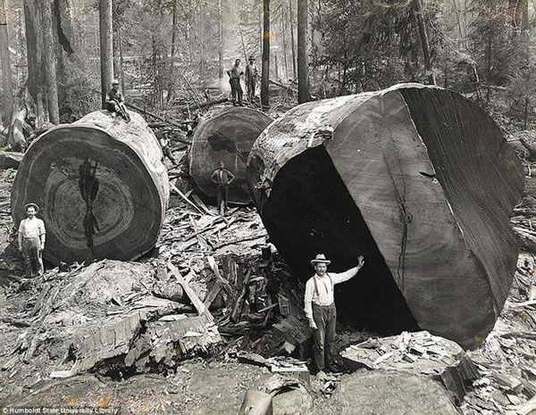 photos historiques rares