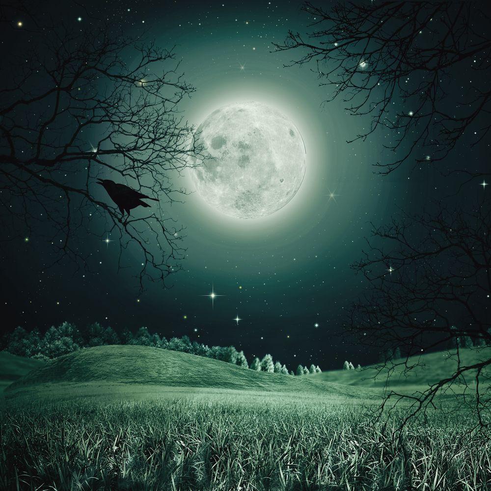 5 fa ons d 39 utiliser la puissante nergie de la pleine lune for Jardin et la lune