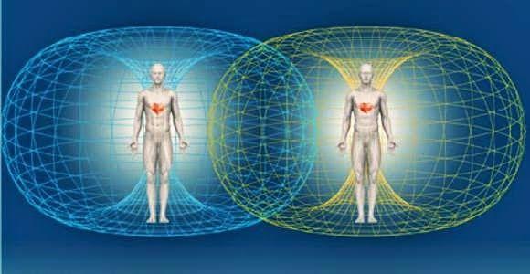 Des scientifiques ont découvert un 6ème sens magnétique