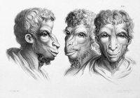 LORSQUE VOUS REGARDEZ LES SINGES, VOYEZ-VOUS UN AIR DE FAMILLE? Même si nous sommes un peu différents des primates, les humains ont évolué à partir de cette famille et possèdent encore 99% de leur ADN.