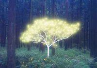 arbres pour se soigner