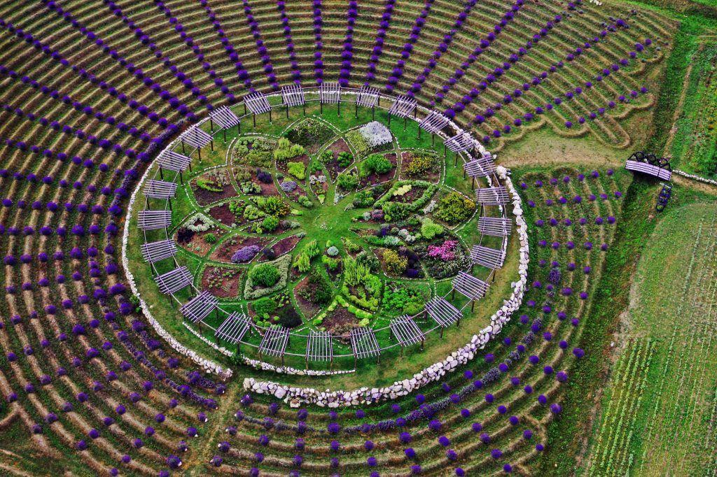 labyrinthe de lavande