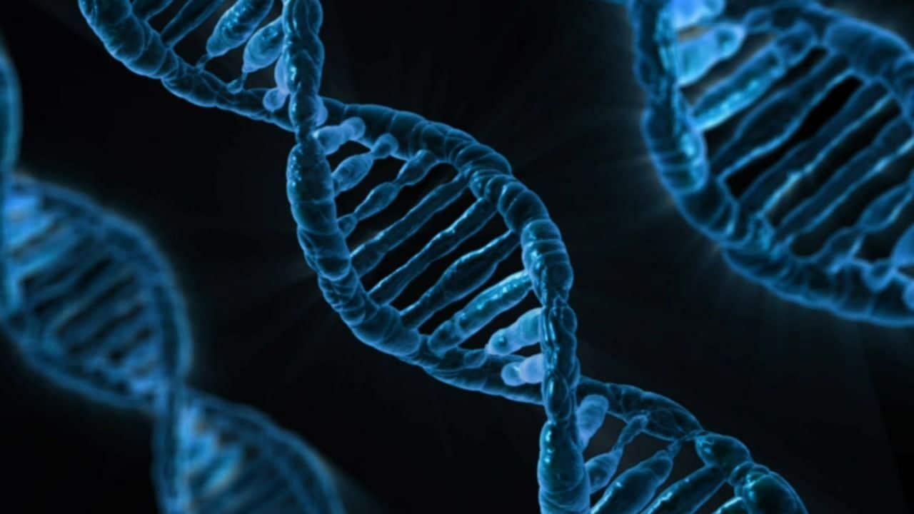 nos gènes