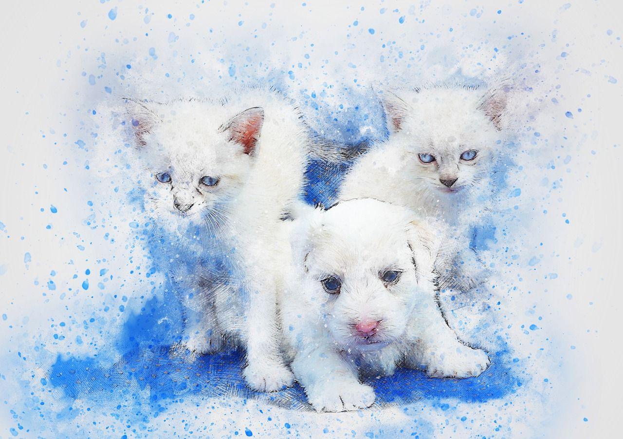 chien ou chat