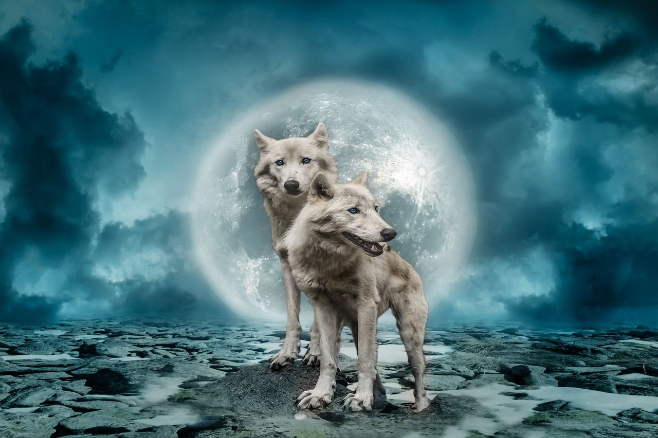 pleine lune des loups