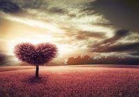 signification de l'amour