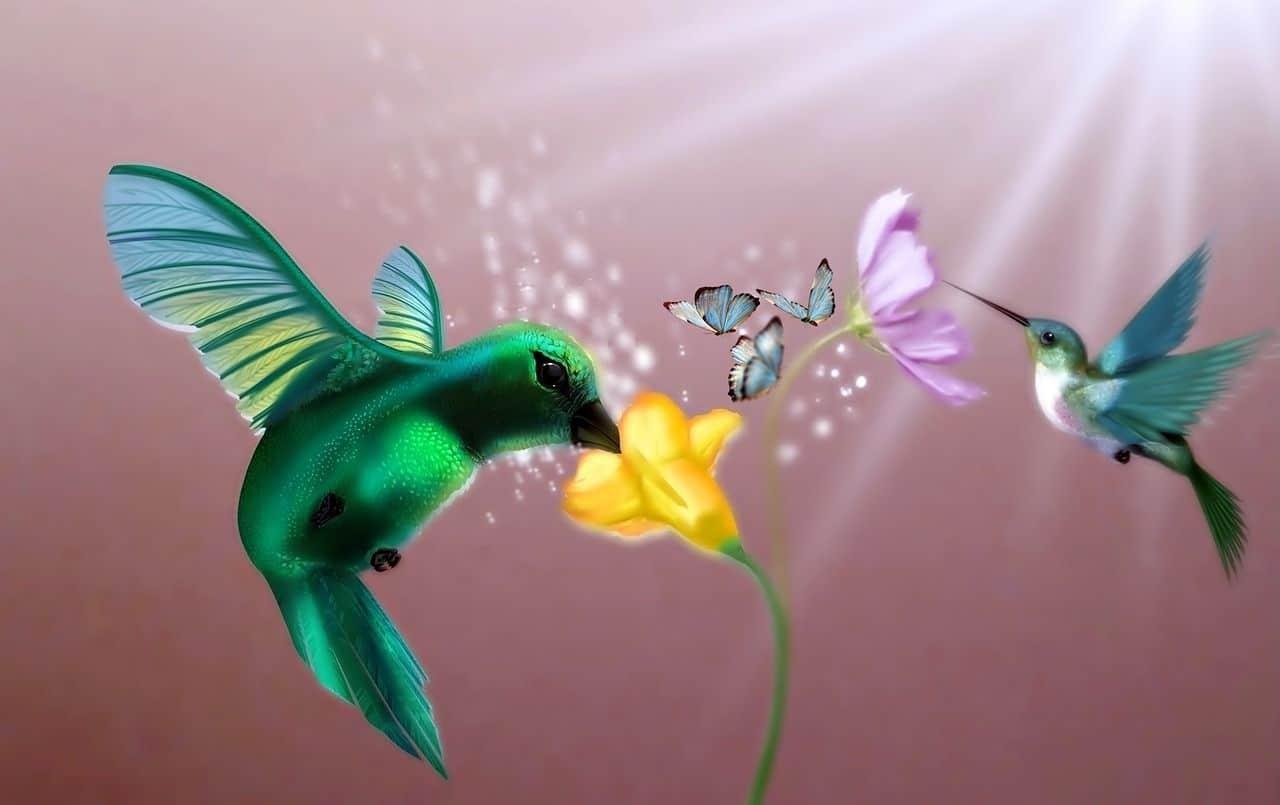 colibri possède une signification spirituelle