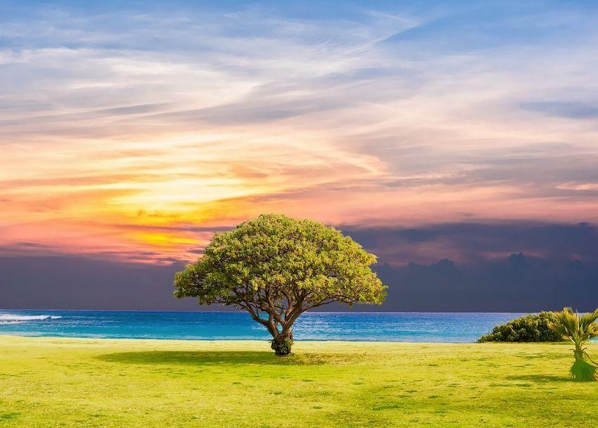 Comment les arbres nous aident à guérir avec leur incroyable énergie Comment-les-arbres-nous-aident