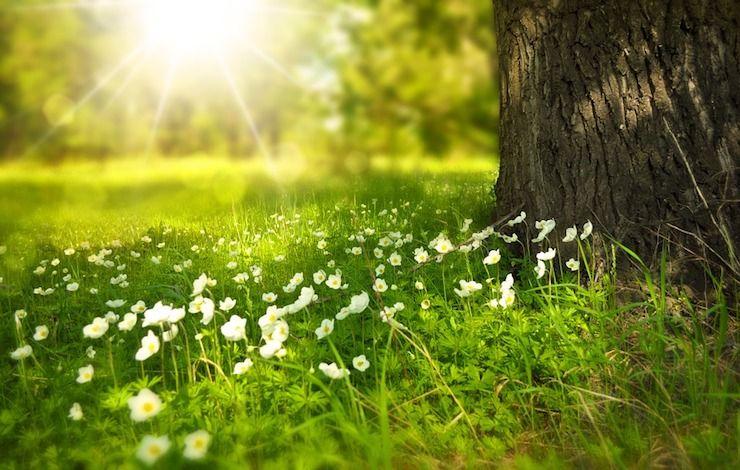 solstice d'été