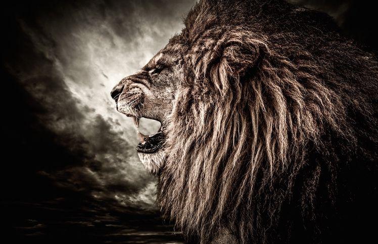 Astrologie: le portail du Lion