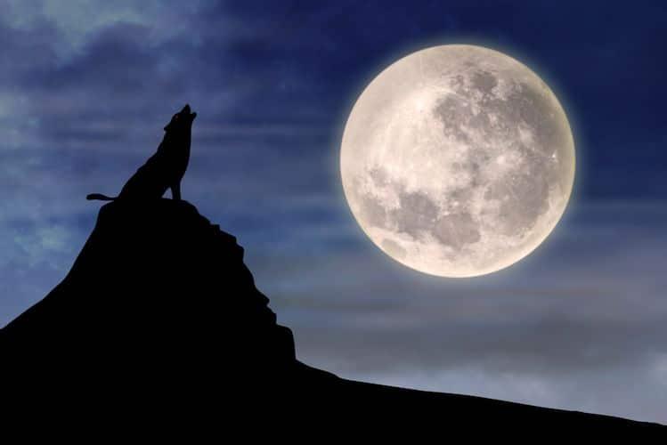 pleine lune du castor