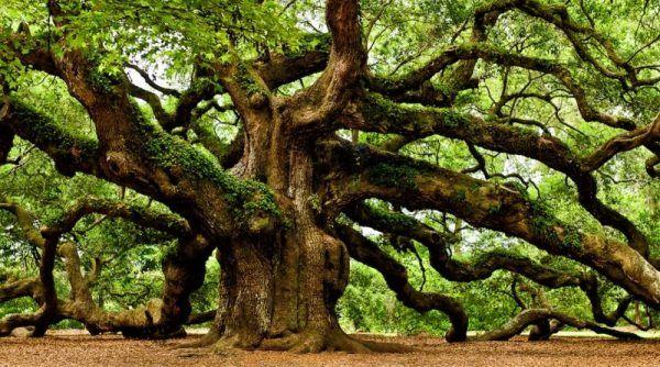 arbres mystérieux